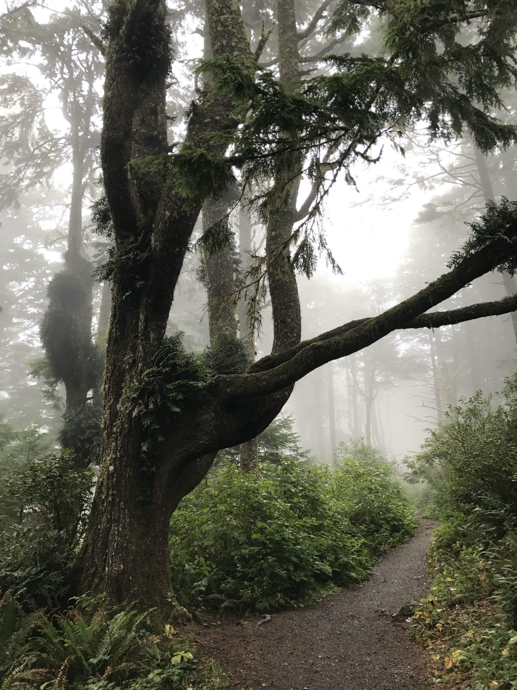 Cape Lookout, Oregon, USA